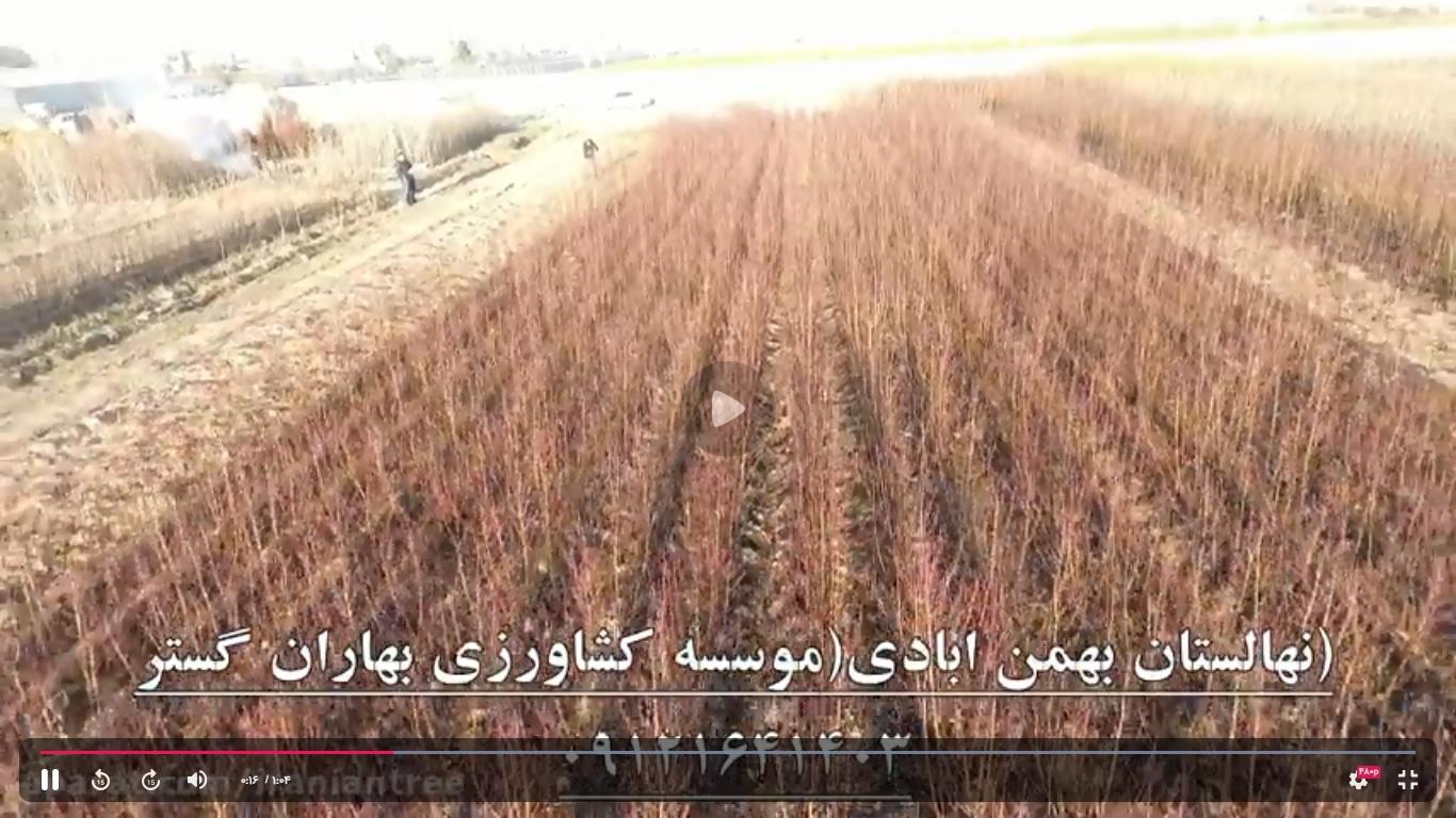 موسسه کشاورزی بهاران گستر