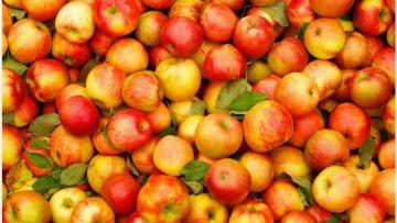 ارقام نهال سیب